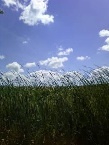 WisconsinField&Sky